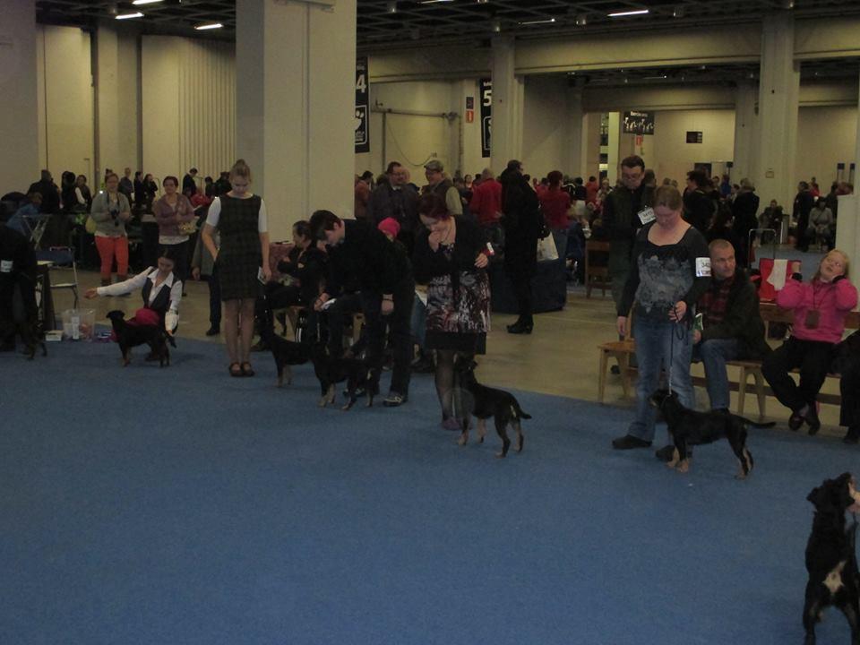 Deler av beste tispe klassen på lørdag. Mange bra hunder og en streng dommer hadde tynnet en del i rekkene allerede!