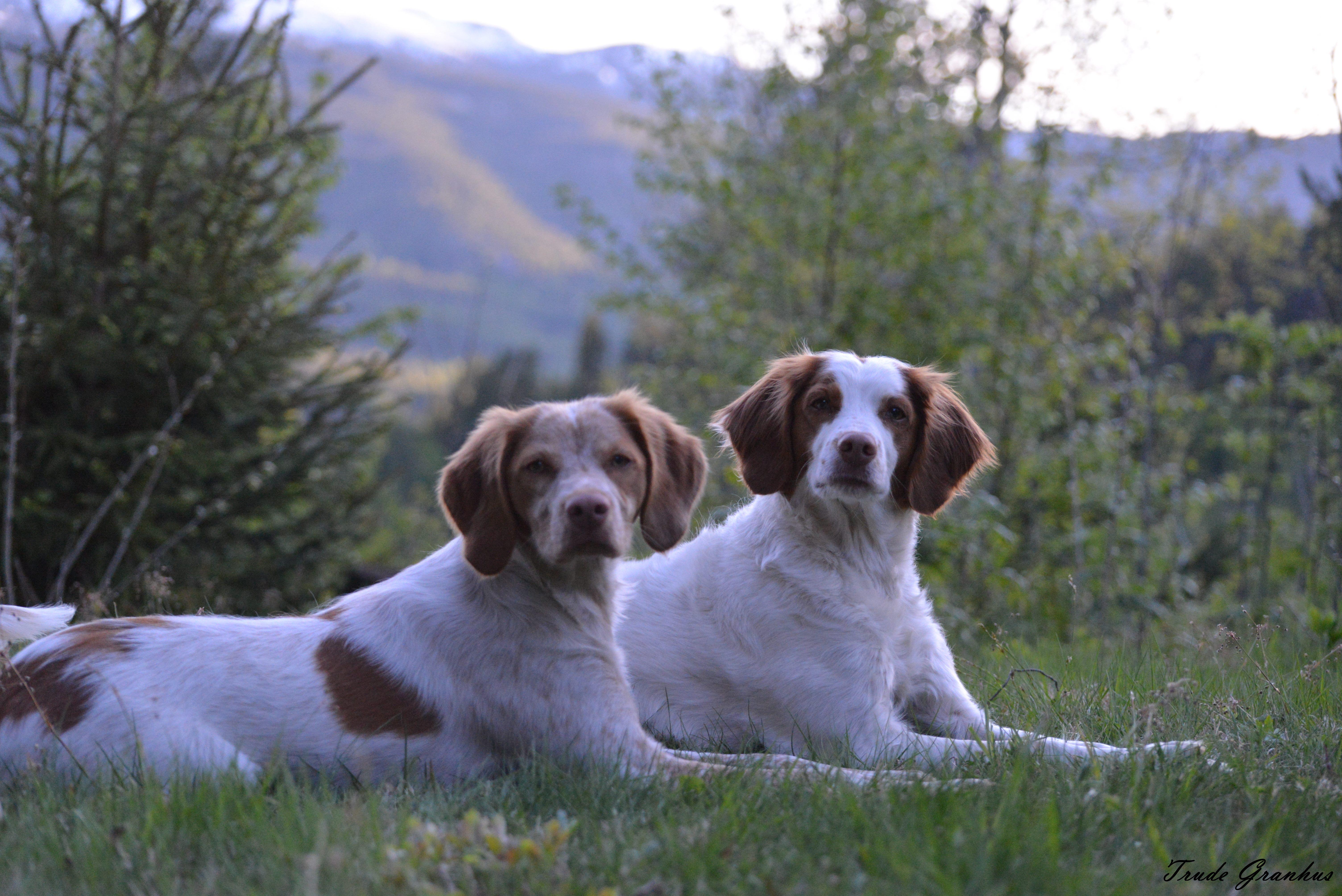 Lady og Lotte.