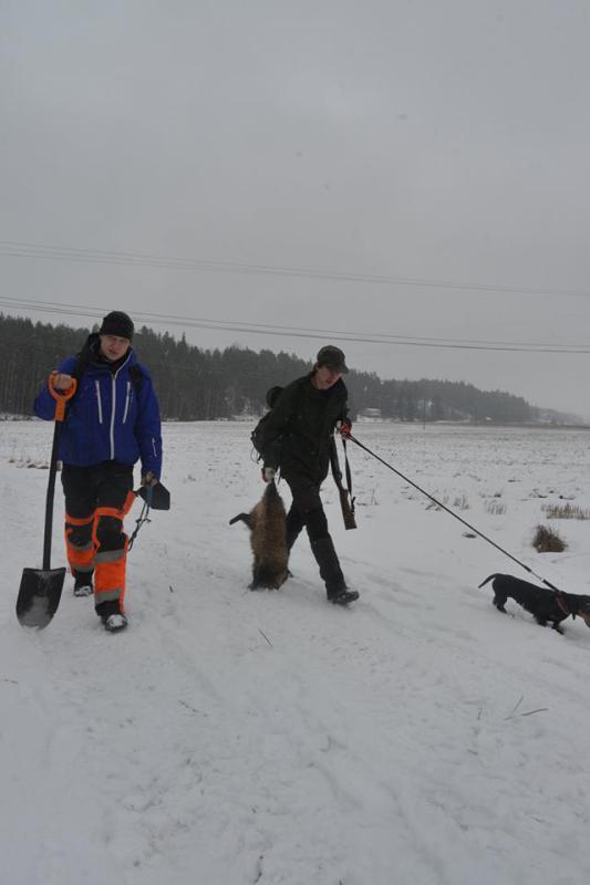 Santeri dachs og mårhund