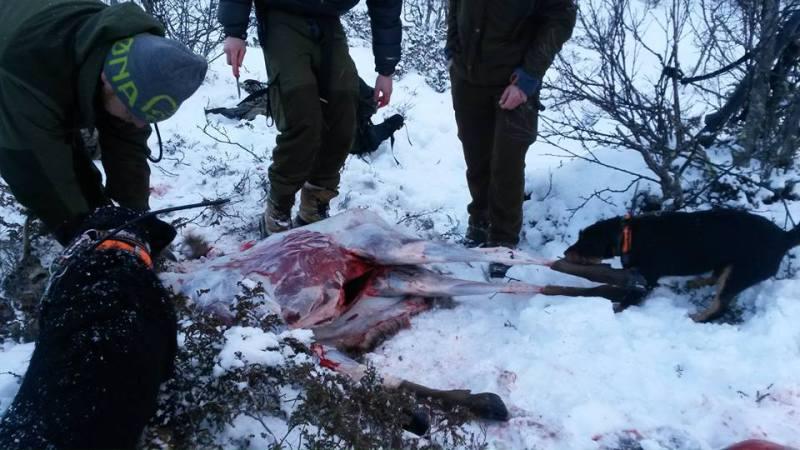 Hjort Høvet slakting 2