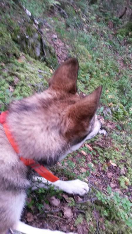 Lisa i skogen